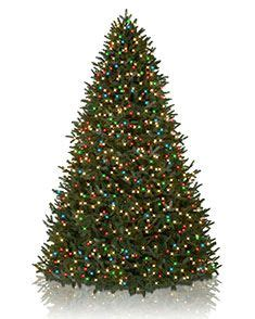 small colored trees best 25 12 ft tree ideas on 7ft
