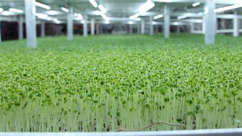 Engine Check Light by How To Grow Microgreens The Beginner S Guide