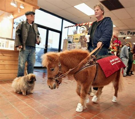 how many pony in a pound illinois may approve mini seeing eye horses as service