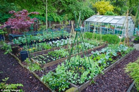 Good enough to eat: Grow vegetables that will add colour