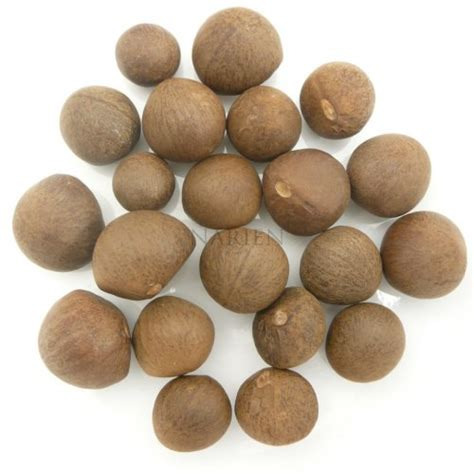 with seed tea seeds camellia sinensis narien