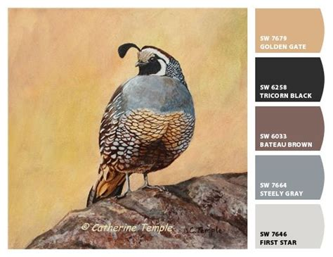 paint color quail 42 best images about birds on folk folk