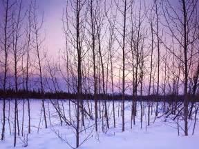 winter trees winter trees introdekatelyn