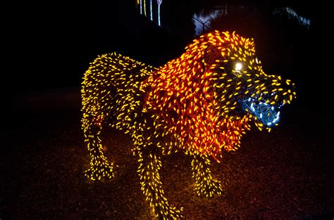 zoo lights discount zoo lights discount tickets gordmans coupon code