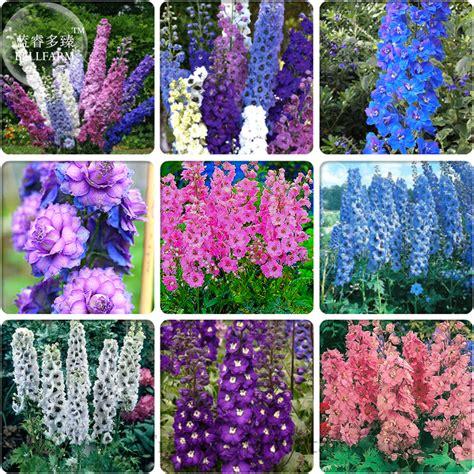 garden flower types top 28 types of flower gardens 50 best types of