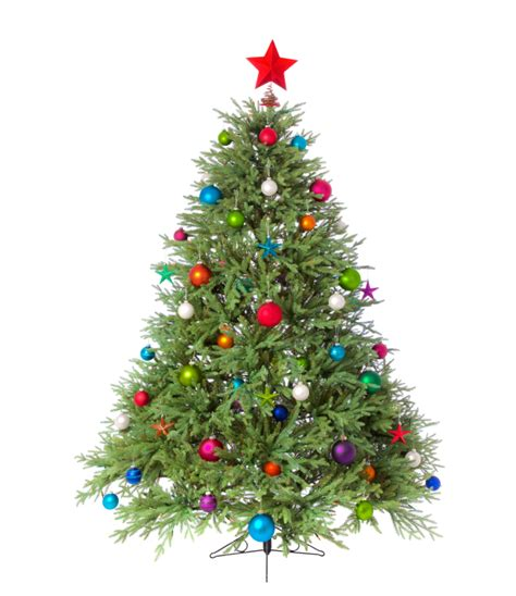 www christmastrees the best of trees