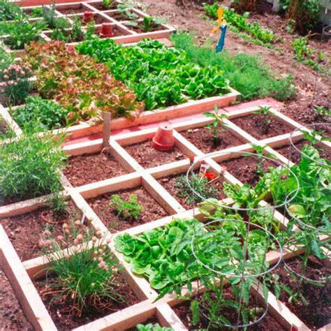 kitchen vegetable garden small kitchen garden small vegetable garden ideas