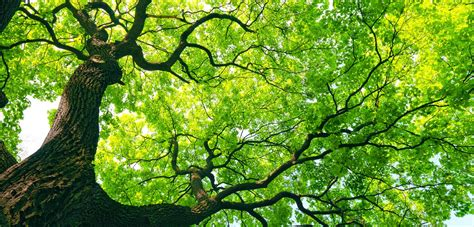 tree of sydney tree solutions tree removal sydney tree surgeon