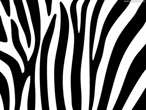 zebra stripes image black and white zebra stripes background