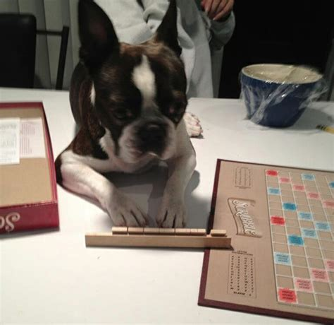 is sog a scrabble word 16 dogs who want to bring back