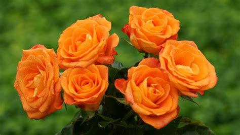 rosary from flowers orange haidemorala