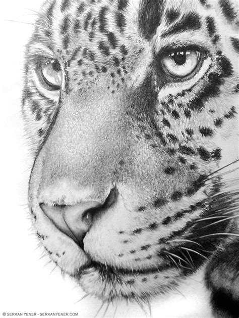 Pencil Artwork Images by Pencil Drawing Of A Tiger Serkan Yener