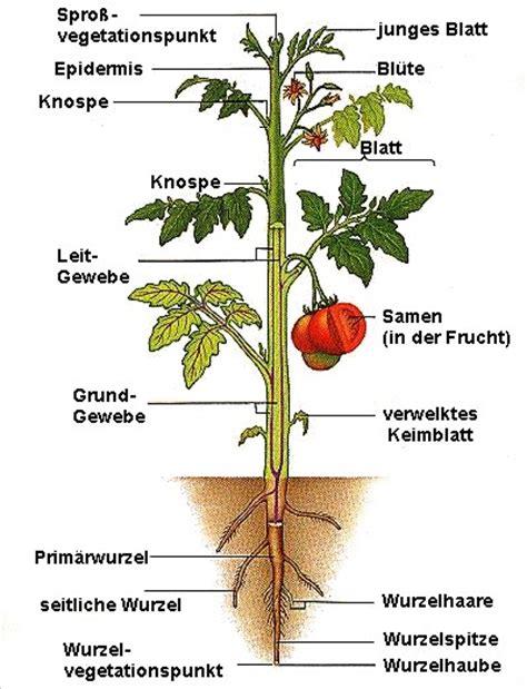 Der Innere Garten Pdf by Innerer Und 228 U 223 Erer Aufbau Gartenbau Theorie
