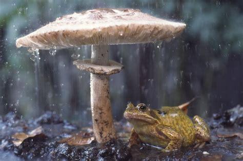 outdoor animals amazing animals photography with umbrellas