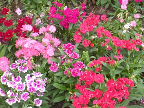 flowers gardens pictures baby huggables flower gardens