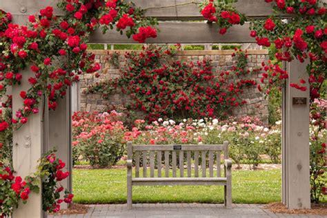 bench nature rose garden flowers roses wallpaper flower