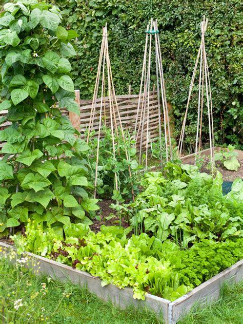 growing vegetable garden quot how does your garden grow quot top 10 for growing