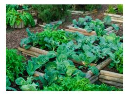 how to set up a vegetable garden bed how to set up a vegetable garden bed how to set up a