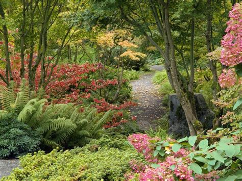 washington botanic garden nature bellevue botanical garden washington picture nr