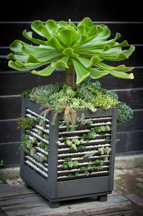 succulent planter ideas 47 succulent planting ideas with tutorials succulent