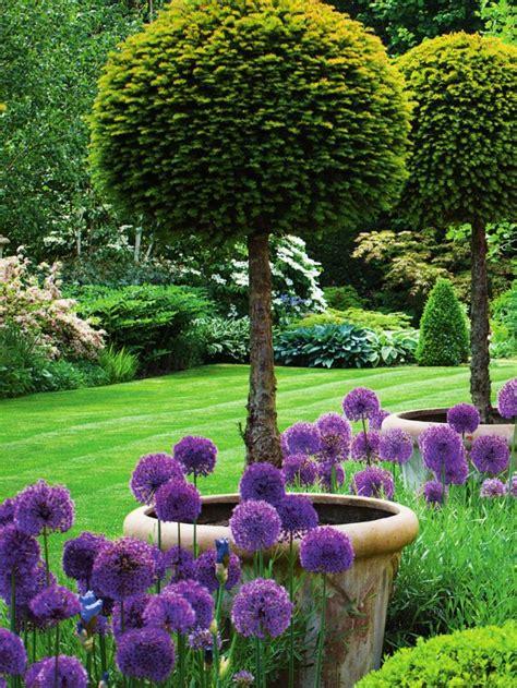 summer garden ideas garden with lollipop yews and allium purple