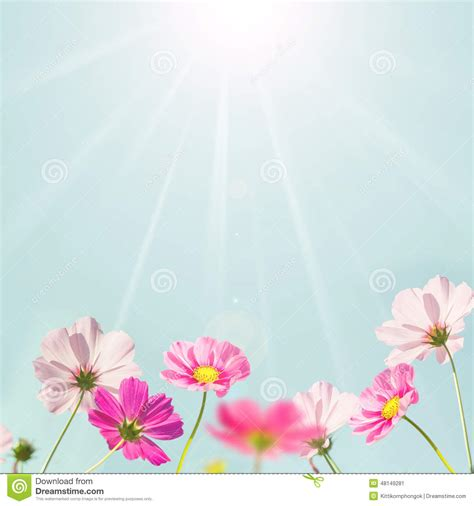 light flowers soft background with pink flower stock photo image