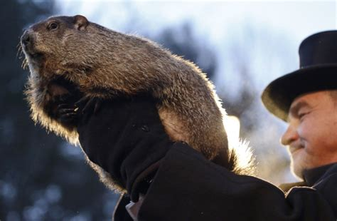 how to groundhog day groundhog day punxsutawney phil makes forecast 3 other