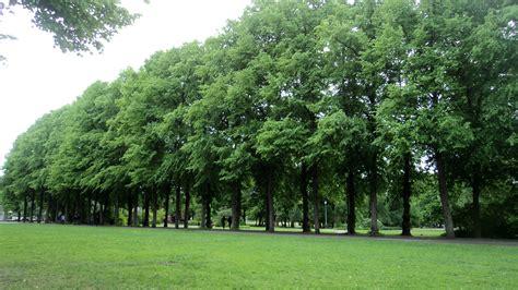 tree of top 10 benefits of trees