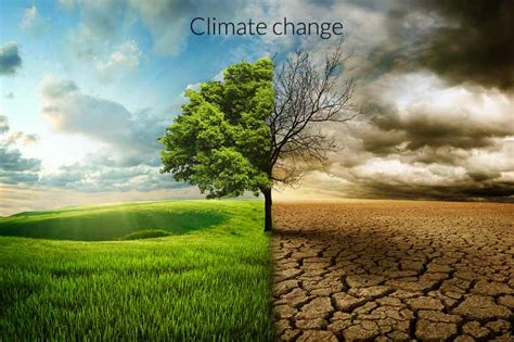 chagne trees what is climate change