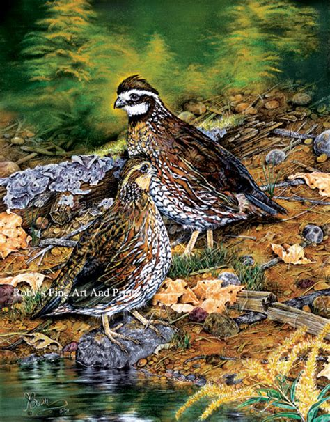 paint color quail the gallery for gt quail painting