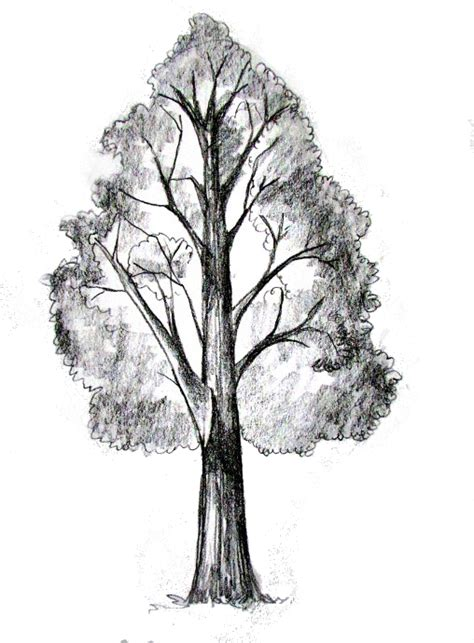 how to draw tree pictures how to draw a tree tutorial drawing painting how to