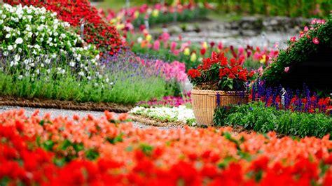 flower gardening for dummies garden flower 1280x853px garden flower tulips 379487