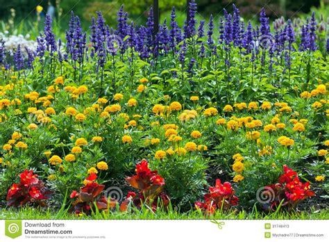 yellow garden flower colorful blooming flower garden stock image image 31748413