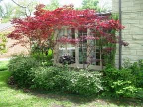 maple tree small yard japanese maple gardens and yards small ornamental trees japanese maple and