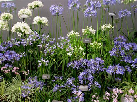small flower garden plans small flower garden design ideas
