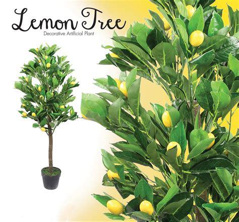 poundstretcher trees brighten your garden with poundstretcher poundstretcher