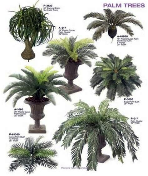 popular types of trees palm species as house plants hardy solutions