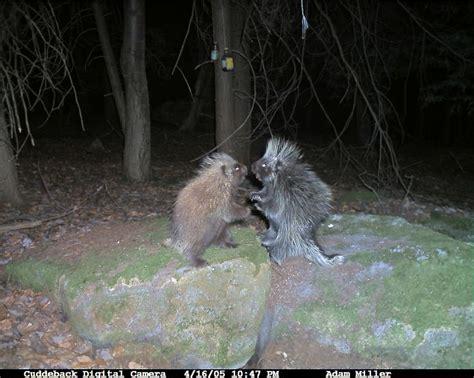 animal cam how to track animals via trail camera