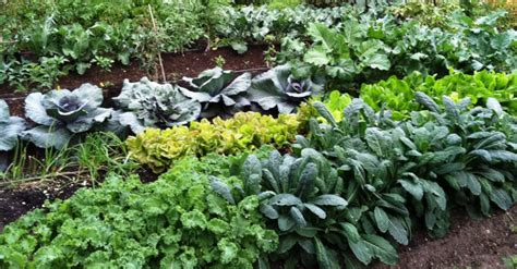 best organic compost for vegetable garden 7 best ways to make your own compost to grow