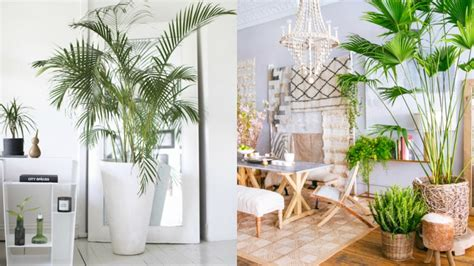 decorate with how to decorate with tropical style real and origin