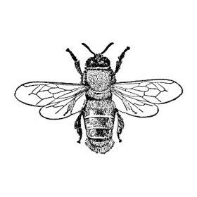honey bee rubber st 48 best images about animals on honey bees