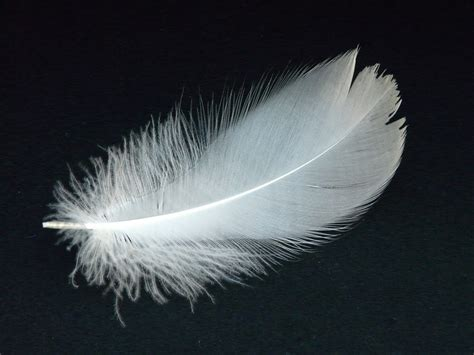feather with dumbo s feather petersen voice studio