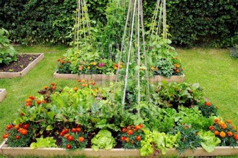 world therapy connection 5 tips to a perfect summer garden