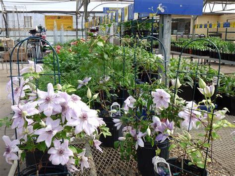 lowes garden center flowers lowe s garden center minot nd