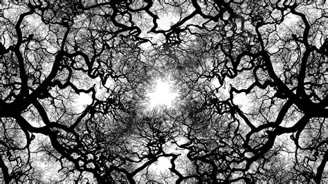 black and white tree tree black and white widescreen hd wallpapers 4244