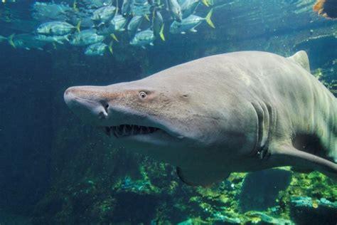 aquarium quot nausicaa quot de boulogne sur mer ec77
