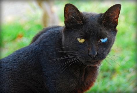 black cat black cats are awesome here are 32 of them