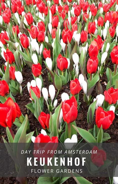 netherlands flower garden in bloom the beautiful keukenhof flower gardens near