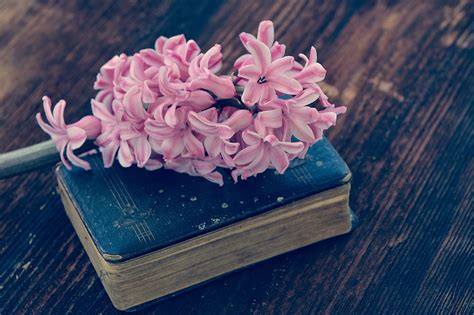 flower picture book free photo hyacinth book flower flowers free image