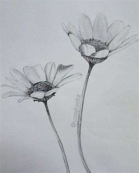 the 25 best daisy drawing ideas on pinterest spine